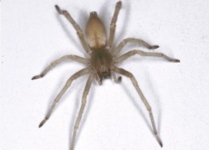 extermination araign e infestation montr al. Black Bedroom Furniture Sets. Home Design Ideas