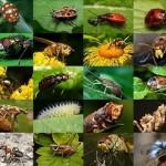 exterminateur-insecte