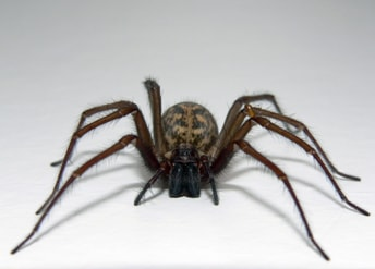 éliminer-les-araignées