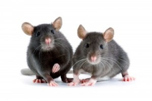 eloigner les souris