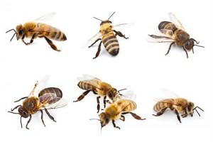 Exterminer un nid de gu pes ou un essaim d abeilles - Essaim de guepe ...