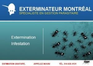 exterminateur-montreal