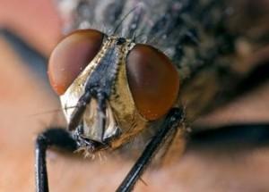 exterminer-les-mouches