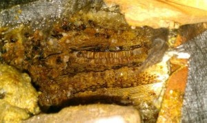 nid abeilles