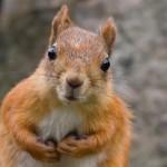écureuil gentil