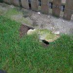 terrier-de-rat-cloture