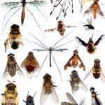 L'insecte dans le monde animal