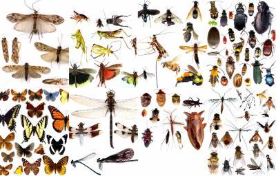 Planche d'insecte
