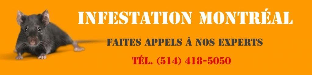 Infestation Montréal Service Exterminateur 514-418-5050